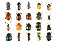 Showtime! Wild World of Insects